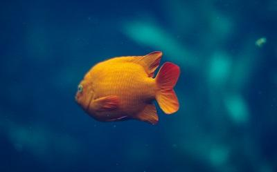 Jakie Oświetlenie Do Akwarium Kupić Które Najlepsze