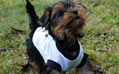 a52cf16f9243f Ubranka dla psa - jak wybrać? Które najlepsze dla psów? - wiadomości ...